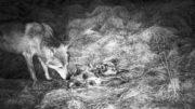 Bilde fra viltkamera