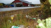 Grøftekant med søppel
